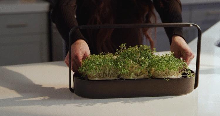 tablefarm-smart-indoor-microgarden-delivers-fresh-greens-countertop-featured-image