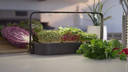 tablefarm-smart-indoor-microgarden-delivers-fresh-greens-countertop-full